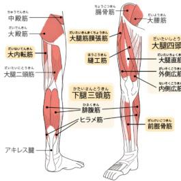 変形性股関節症の2タイプ