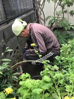 草引き・家庭菜園、腰は大丈夫ですか?①