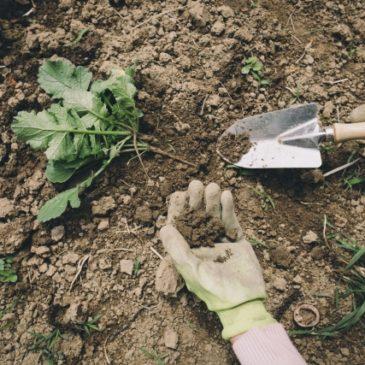 草引き・家庭菜園、腰は大丈夫ですか? ②