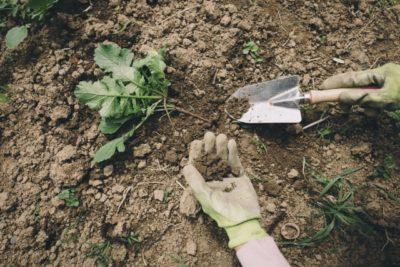 草引き 庭仕事 腰痛
